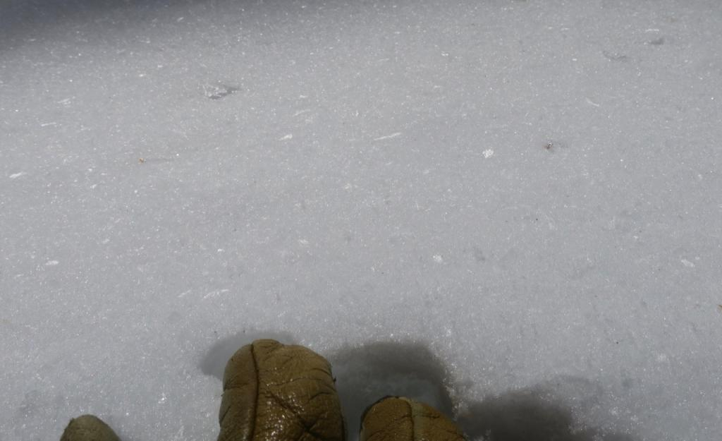 """Older and larger <a href=""""/avalanche-terms/surface-hoar"""" title=""""Featherly crystals that form on the snow surface during clear and calm conditions - essentially frozen dew. Forms a persistent weak layer once buried."""" class=""""lexicon-term"""">Surface Hoar</a> that had been previously knocked over"""