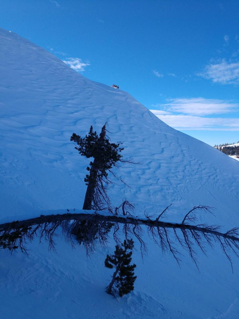 Another image of widespread wind affect in the Donner Peak area