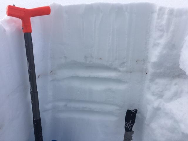 "Recent storm snow on top of the Jan 4 <a href=""/avalanche-terms/rain-crust"" title=""A clear layer of ice formed when rain falls on the snow surface then freezes."" class=""lexicon-term"">rain crust</a>.  NE <a href=""/avalanche-terms/aspect"" title=""The compass direction a slope faces (i.e. North, South, East, or West.)"" class=""lexicon-term"">aspect</a> at 7800&#039; in open treed location."