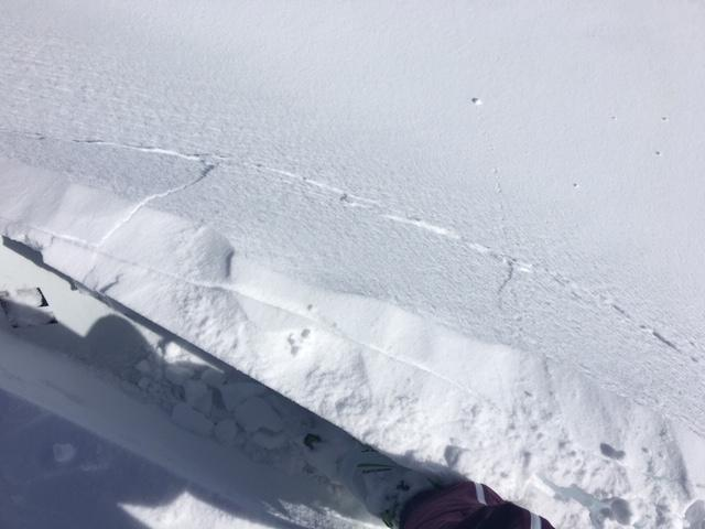 """Minor cracking in newly forming <a href=""""/avalanche-terms/wind-slab"""" title=""""A cohesive layer of snow formed when wind deposits snow onto leeward terrain. Wind slabs are often smooth and rounded and sometimes sound hollow."""" class=""""lexicon-term"""">wind slabs</a> today."""
