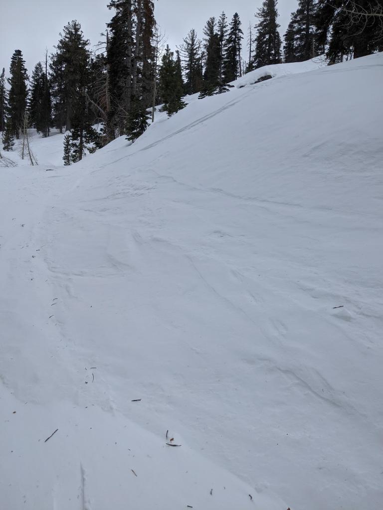 Wind scouring on a test slope at Elephant's Hump.