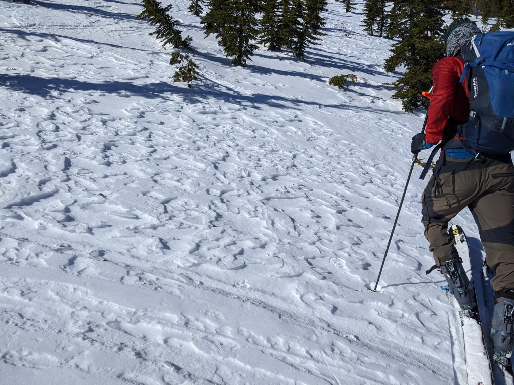 "Wind affected snow surfaces on a semi-sheltered NE <a href=""/avalanche-terms/aspect"" title=""The compass direction a slope faces (i.e. North, South, East, or West.)"" class=""lexicon-term"">aspect</a>"