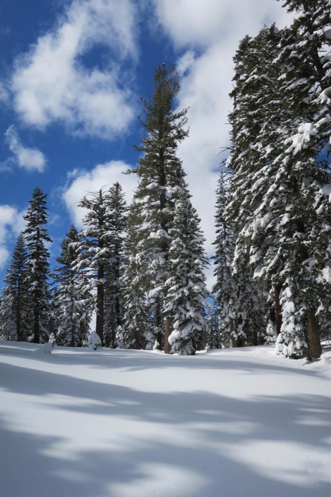 "This open clearing surrounded by trees at 8300 feet did not have <a href=""/avalanche-terms/surface-hoar"" title=""Featherly crystals that form on the snow surface during clear and calm conditions - essentially frozen dew. Forms a persistent weak layer once buried."" class=""lexicon-term"">surface hoar</a> present, but larger clearings just above it did."