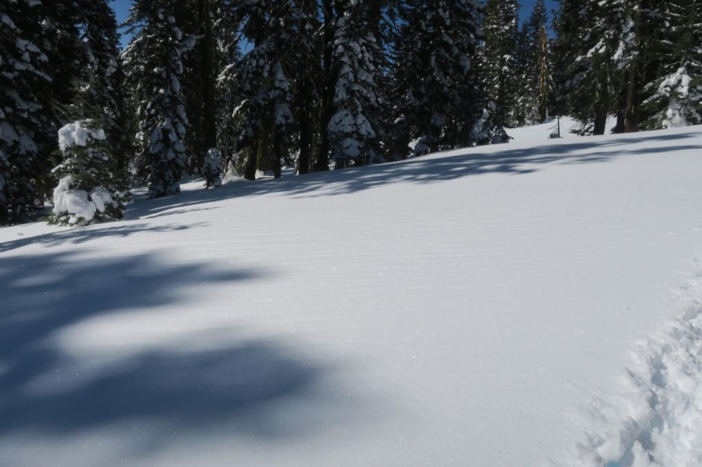 """Low angle sunny slopes on Becker Ridge had runnels under a melt freeze crust capped by <a href=""""/avalanche-terms/surface-hoar"""" title=""""Featherly crystals that form on the snow surface during clear and calm conditions - essentially frozen dew. Forms a persistent weak layer once buried."""" class=""""lexicon-term"""">Surface Hoar</a>."""