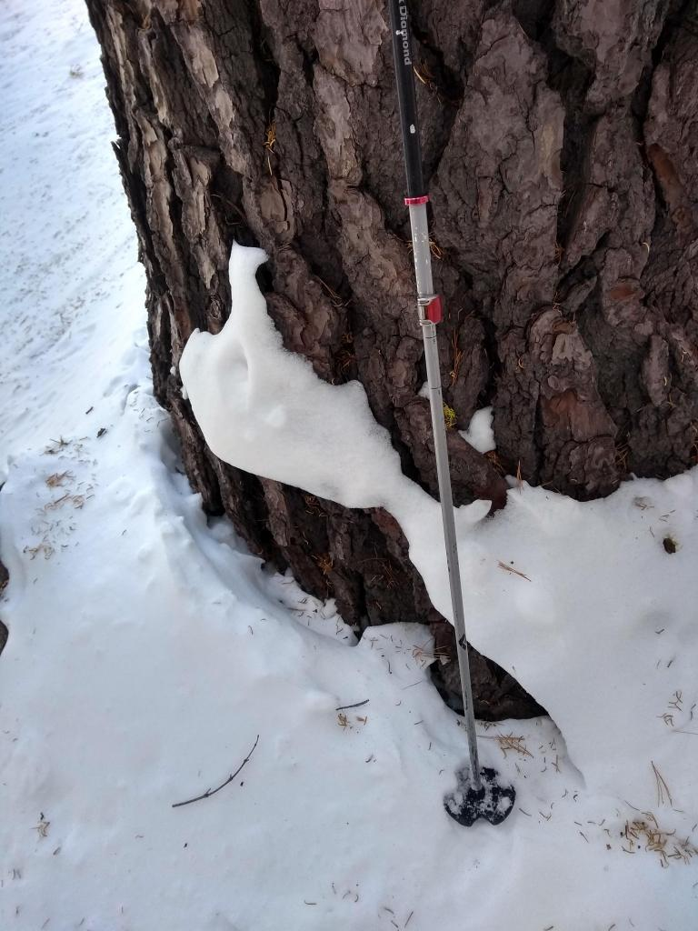 """~10 inches (25 cm) of <a href=""""/avalanche-terms/settlement"""" title=""""The slow, deformation and densification of snow under the influence of gravity. Not to be confused with collasping"""" class=""""lexicon-term"""">settlement</a> and consolidation"""