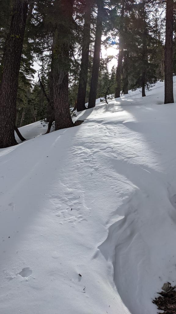 NE wind effect snow surface texture below treeline.