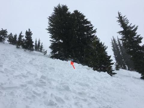 This is the debris field, the arrow marks where the snowboarder had ended up in the tree and was buried up to his waist.  His head and neck were above the snow the whole time, and had no injuries.
